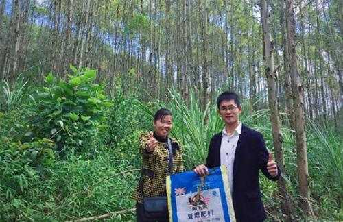 来宾象州县桉树黄化使用桉主席后叶子转绿